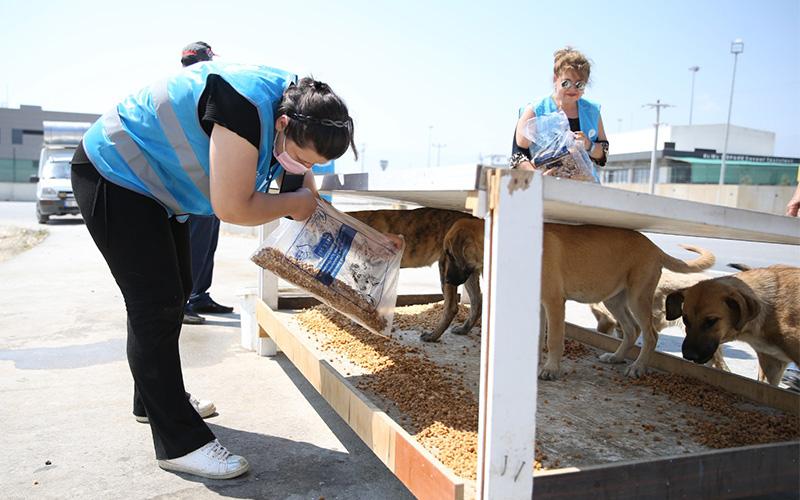 Merkezefendi'de atık gıdalardan aylık 4,5 ton mama üretiliyor