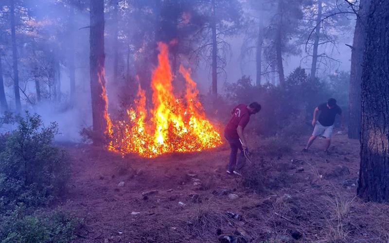 Ormanlık alandan alevler yükseldi, ekipler hızla müdahale etti
