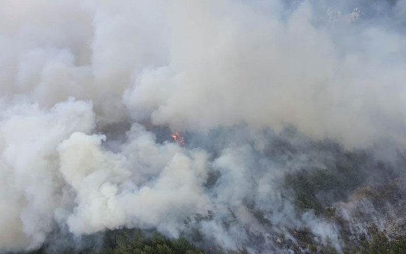 Acıpayam'da orman yangını