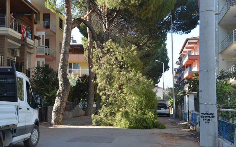 Çam ağacının kırılan dalı yola düştü
