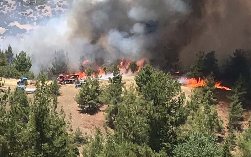 Buldan'daki orman yangınında alevler yayılıyor