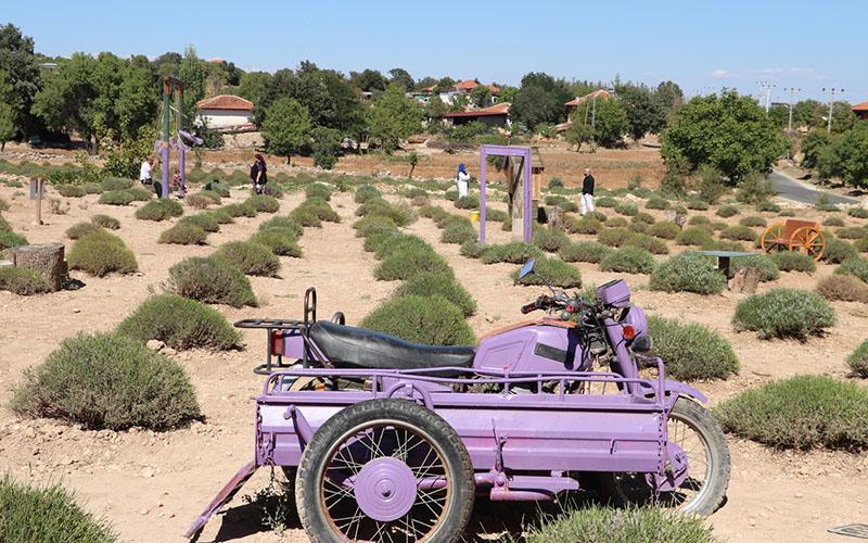 Pamukkale'deki lavanta bahçeleri ilgi çekiyor