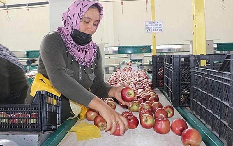 Meyve tasnif ve ambalajlama tesisi satışa çıkarıldı