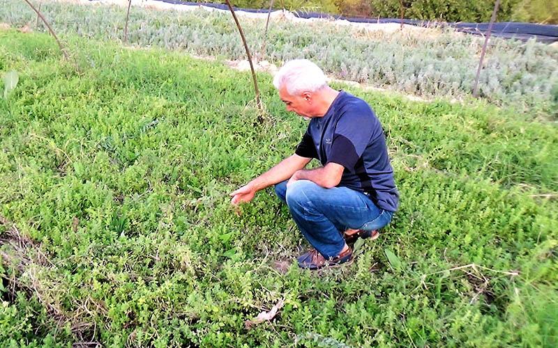 Prof Dr Çelik: Türkiye'nin tıbbi aromatik bitkilerden geliri 150 milyar dolar olabilir