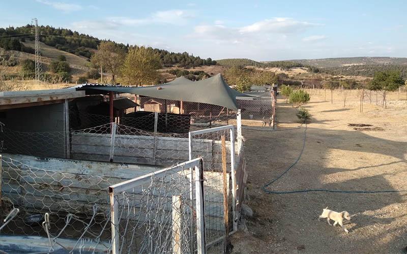 Buldan'a Sokak Hayvanları Bakım Evi ve Rehabilitasyon Merkezi yapılacak