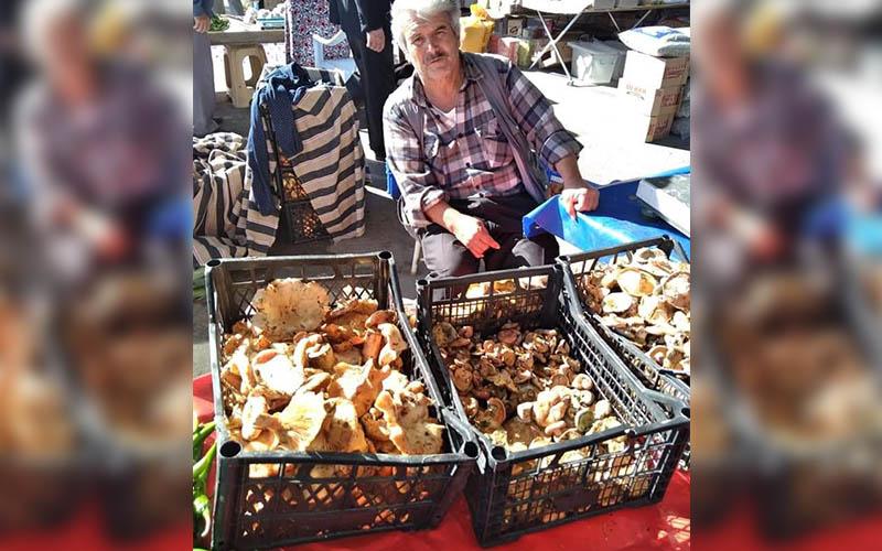 Çıntar pazara çıktı, kilosu 110 lira