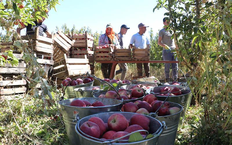 Özkul: Elma üretiminde maliyet arttı, fiyatlar 15 yıl öncesine döndü