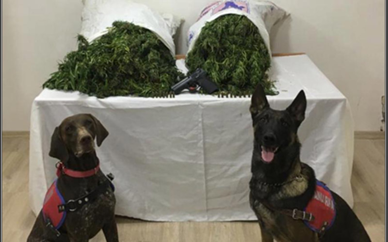 Uyuşturucu operasyonunda 18 kilo kubar esrar ele geçirildi