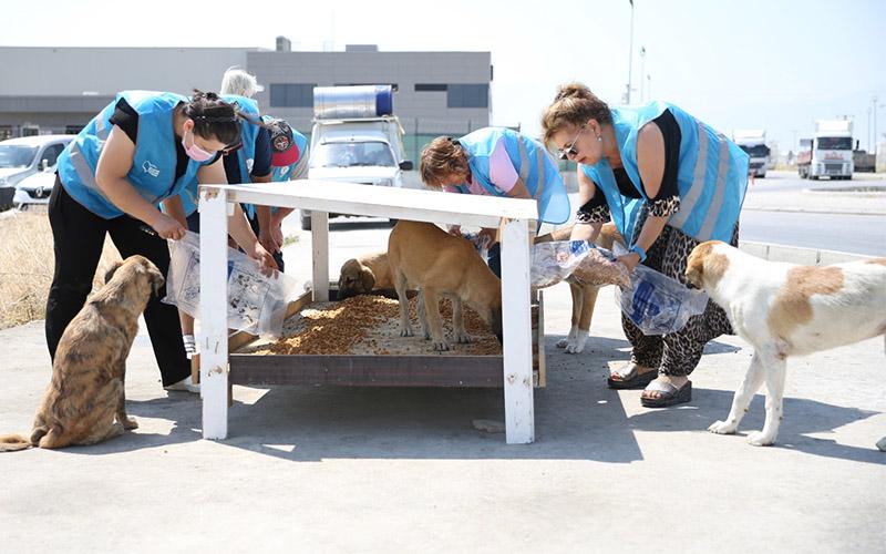 Merkezefendi Belediyesinin mamaları ile 1.200 sokak hayvanı besleniyor